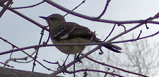Bird in Winter Time